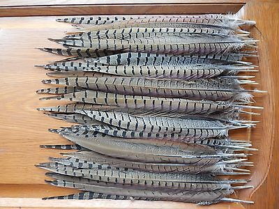 """50+ Cock Pheasant Tail Feathers 12"""" - 16"""" Fly Tying Arts Crafts"""