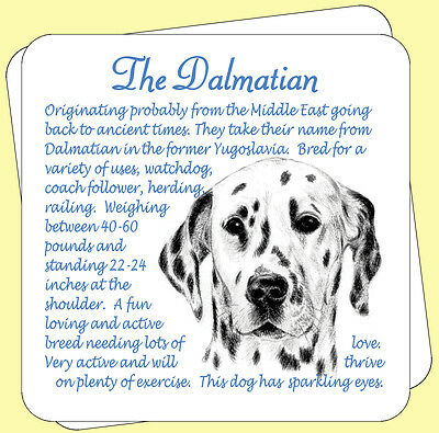 Dalmation Dog Origins And Breed Facts Pair Of Gift Packed Wooden Coasters