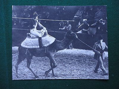 Fine Antique Press Photo of Prince Charles Riding a Camel