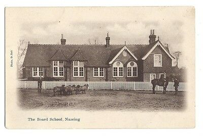 Nazeing Essex The Board School Postcard Horse And Sheep!