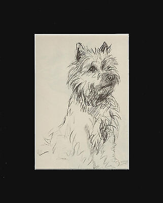 """Cairn Terrier Dog Sketch by Lucy Dawson 1940  8X10"""" Matted Print"""