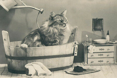 Beautiful Cat In Getting a Bath Antique Photo - LARGE New Blank Note Cards