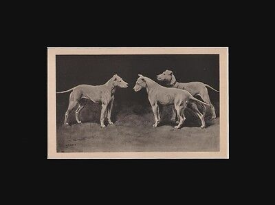Antique Bull Terrier Dogs Print  by Arthur Wardle 1897 9X12 Matted