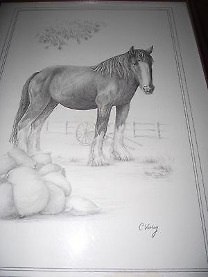 Framed Shire Horse Print By C Varley.