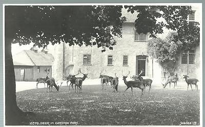 Old Postcard Judges   Deer In Cowdray Park      Sussex     Not Posted