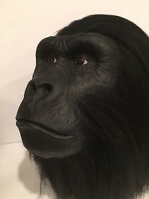 Life Size Gorilla Display Prop Head Silver Back Planet Of The Apes
