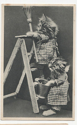Cute Kitten Cats Cleaning - Vintage Photo Postcard PM 1947