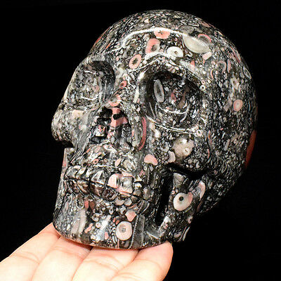 5Inch Crinoid Fossil Carved Crystal Skull, Realistic,Shipping DHL, 3.14LB