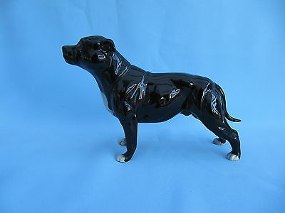 Brindle Dog Staffordshire Bull Terrier Marked On The Foot England