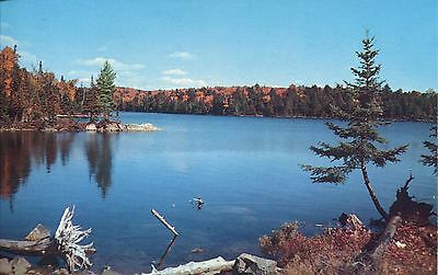 Old Post Card Of Unidentified Lake In Northern  Minnesota