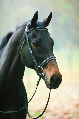 HDR  Dressage Bridle no Flash with Reins Black with White Padding Horse