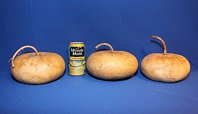 Lot of 3 Canteen Gourds - Medium Sized; Dried and Cleaned