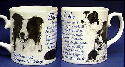 Border Collie With Sheep Origins And Facts Fine Bone China Gift Mug