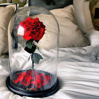 Forever Rose in Glass Dome Belle Beauty and the Beast Disney Christmas day gift