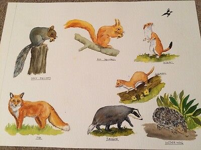 A3 Size Squirrel, Badger, Fox, Hedgehog &Rabbit 2 X Paintings From My Sketch Pad