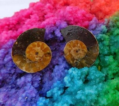 31 Cts. 100% Natural Matched Pair Of Ammonite Shell  Mineral Specimen (NH134)