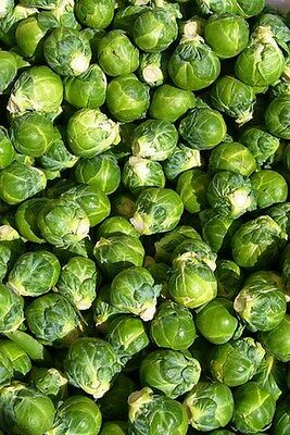 Brussel Sprouts- Long Island- 100 Seeds
