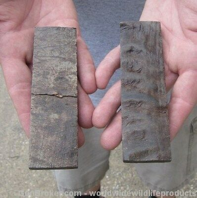 """2 pc lot of 5 inch Polished Buffalo Bark horn knife scales 3/8"""" thick # GUN8303"""