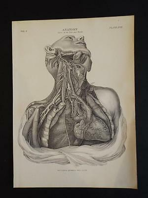 Old Vintage 1910 Anatomical Print - Human Nerves Of The Neck And Thorax