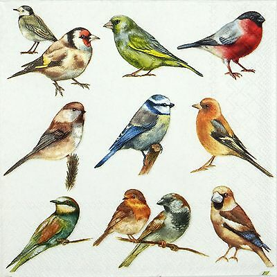 4 Single Table Party Paper Napkins for Decoupage Decopatch Craft Group of Birds