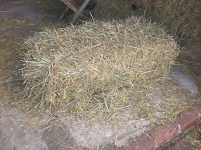 2016 Small bale meadow hay