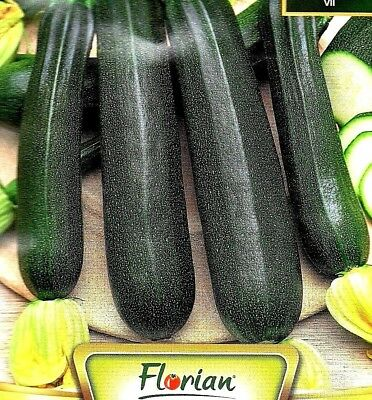 Courgette - Black Beauty - 35 Quality Vegetable Seeds /166