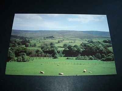 N. IRELAND  GLENELLY PASTURE Co TYRONE  POSTCARD