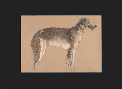 Gorgeous Borzoi/ Russian Wolfhound Dog Print by Cecil Aldin LARGE VINTAGE 1934