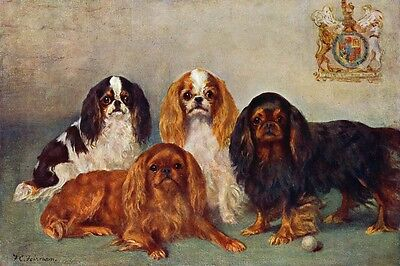 Cavalier King Charles Spaniel Dogs  F. Firman 1907 LARGE New Blank Note Cards