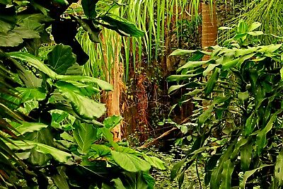 Jungle Forest Trees Palms Plants Photo Wallpaper Wall Mural  GIANT WALL DECOR