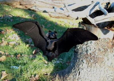 REALISTIC VAMPIRE BAT HAUNTED HALLOWEEN PROP FURRY ANIMAL 46bl FREE SHIPPING USA