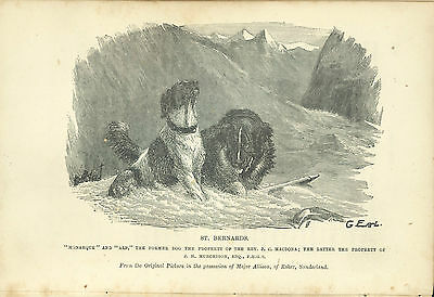 Bookplate St Bernards Monaque and Alp, The Dog by Idstone, Third Ed
