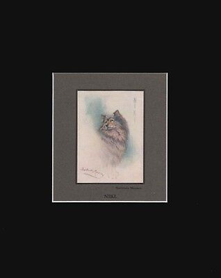 Antique Samoyed Dog Print by by Gertrude Massey 8x10 Matted 1912