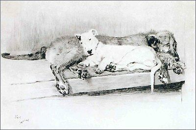 Irish Wolfhound Dog & Bull Terrier Puppies C. Aldin  LARGE New Blank Note Cards