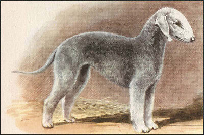 Bedlington Terrier Dog 1942 by Edwin Megargee  ~  LARGE New Blank Note Cards