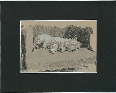 "West Highland White Terrier FUNNY FACE Print 1934  by Cecil Aldin 8X10"" Relaxing"
