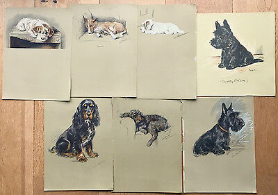 Lot of 7 x orig Lucy Dawson prints, terriers, mongrels, dogs, canine interest