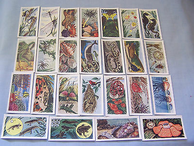 Cigarette cards Mills 1958 'a nature series '25/25