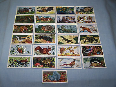 Cigarette cards Mills 1958 'animals of the countryside'  25/25