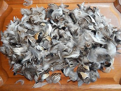 200 + Mixed Teal Duck Feathers Fly Tying Arts Crafts
