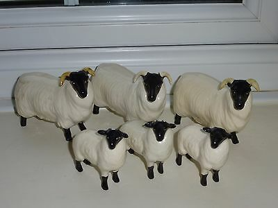 Small Flock Of Beswick Black Faced Sheep