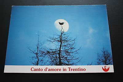 Old Postcard Song Of Love In Trentino Italy Italian  Pc