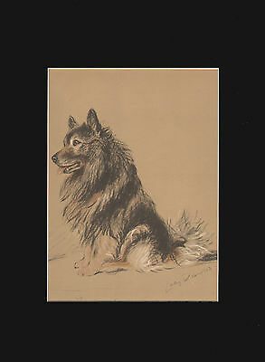 Vintage Keeshond Dog Print 1937 by Lucy Dawson 9x12 Matted