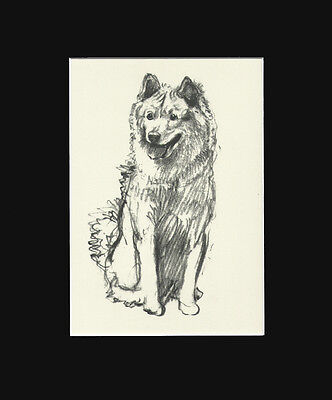 Vintage Cecil Aldin 1939 Print: Chow Chow Matted.