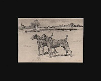 Antique BedingtonTerrier Dogs Print  by Arthur Wardle 1897 8X10 Matted
