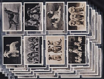 Pattreiouex Ltd., Dogs, Set Of 48 Issued In 1938. All Scanned.