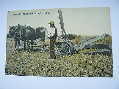 Ipswich Moat Farm Reaping Oats Postcard - Farm Horse & Implement - Smiths