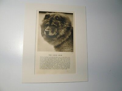 """Mounted 1931 CHOW CHOW dog print 8"""" x 10""""  IDEAL GIFT Collectable"""