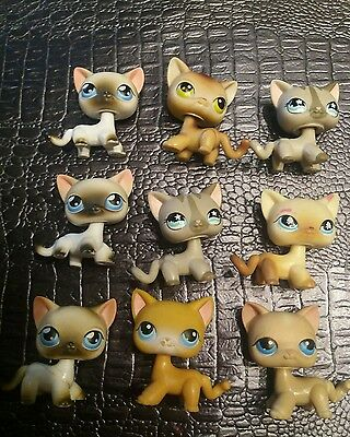 gros lot chat europeen petshop  LPS  KITTY CAT