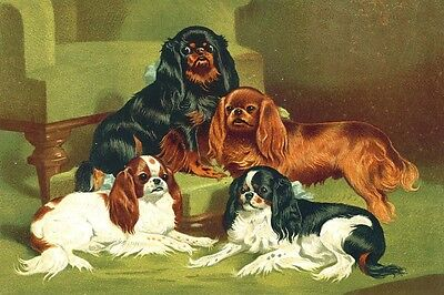 Cavalier King Charles Spaniel Dogs Chromothograph1881 LG New Blank Note Cards